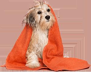 Psi-azil
